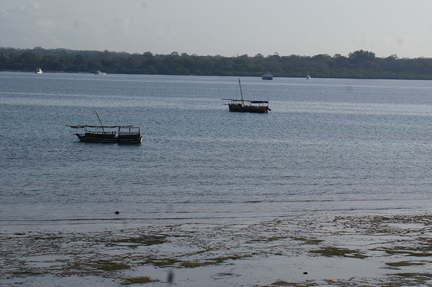 Kenya's Dolphin Island